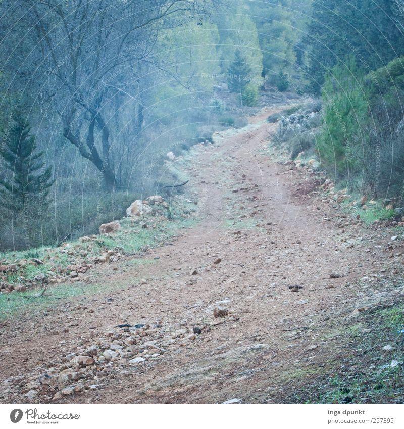 Auf dem Weg.... Berge u. Gebirge wandern Umwelt Natur Pflanze Urelemente Erde Luft Herbst Wetter Nebel Dürre Gras Sträucher Hügel Israel mediterran träumen alt