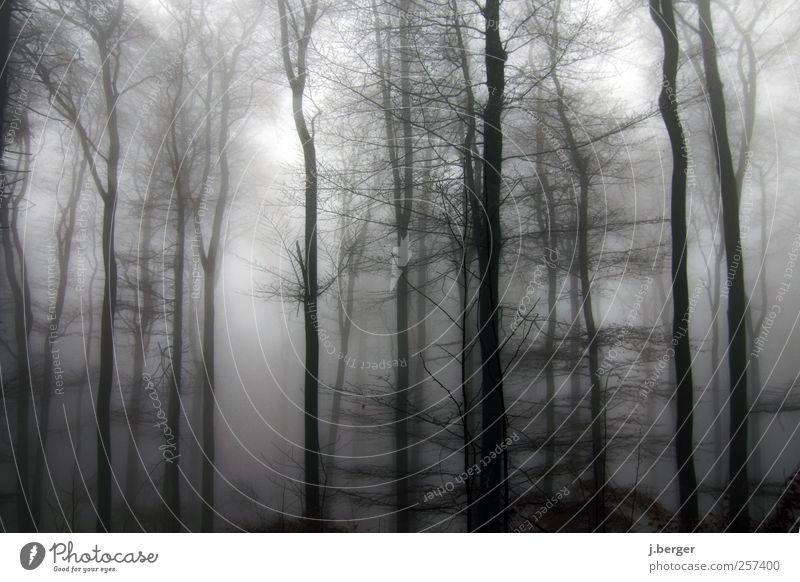 Wald Natur weiß Baum Pflanze Winter schwarz Landschaft grau Regen Eis Nebel Frost gruselig frieren Dunst