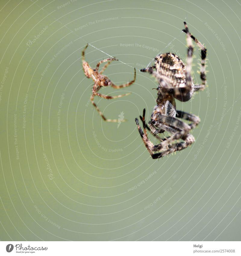 Annäherung ... Natur Tier schwarz Leben Herbst Umwelt natürlich feminin klein außergewöhnlich braun grau Park Tierpaar authentisch Schönes Wetter