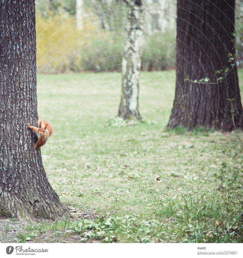 Haltestelle Umwelt Natur Tier Urelemente Herbst Park Wiese Fell Wildtier Tiergesicht 1 hängen klein lustig Neugier niedlich schön braun grün rot Interesse