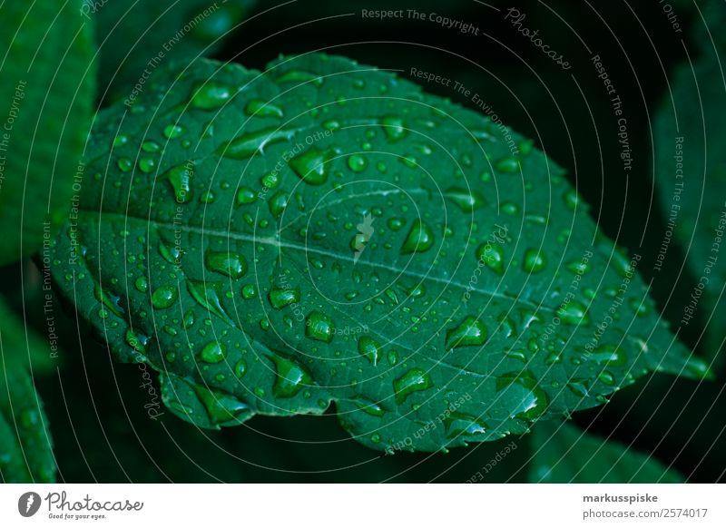 Regentropfen Blatt Garten Natur Pflanze Tier Wasser Wassertropfen Sommer Klima Baum Grünpflanze Nutzpflanze Park Blühend verblüht dehydrieren Wachstum trist