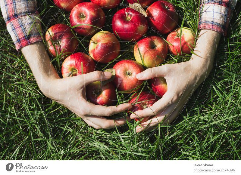Gesunde Ernährung Sommer Pflanze grün Hand rot Foodfotografie Herbst Lebensmittel natürlich Gras Garten Frucht frisch Landwirtschaft Bauernhof