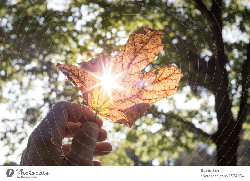 Herbstblatt mit Sonnenstrahlen Hand Natur Sonnenlicht Schönes Wetter Baum Blatt natürlich schön Wärme braun gelb grün orange genießen Herbstlaub herbstlich