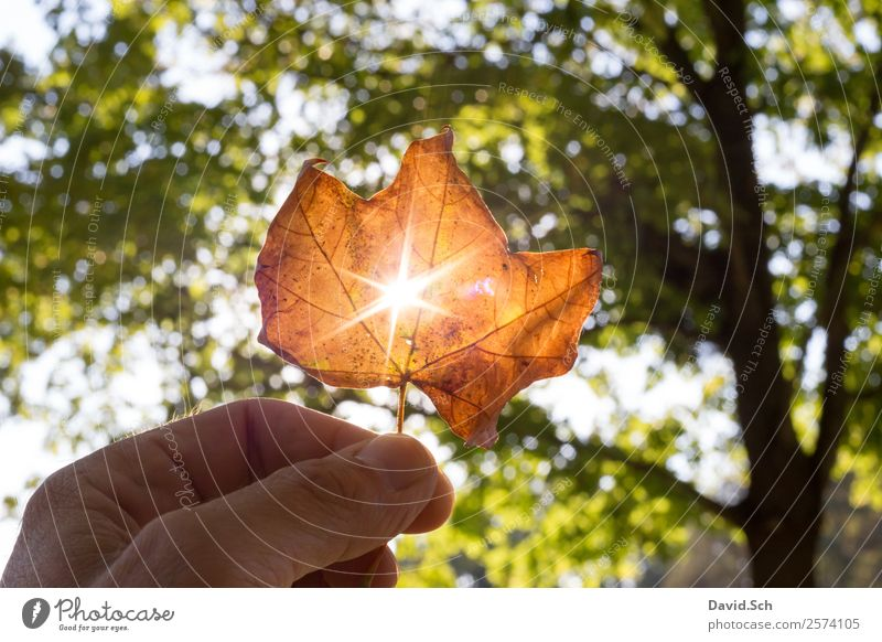 Herbstblatt mit Sonnenstrahlen Hand Natur Sonnenlicht Schönes Wetter Baum Blatt natürlich schön Wärme braun gelb grün orange genießen Herbstlaub Herbstfärbung