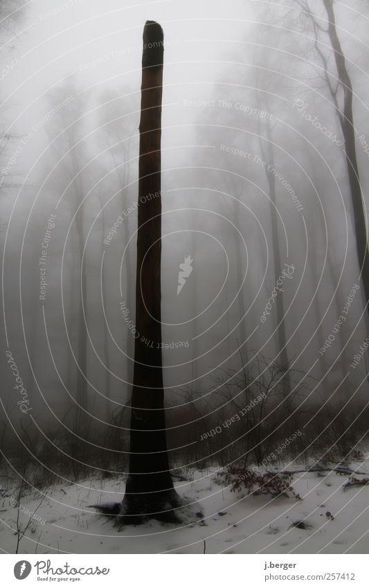 Einzelgänger weiß Baum Pflanze Winter schwarz Einsamkeit Wald Herbst dunkel Schnee Landschaft grau Regen Eis Nebel Frost
