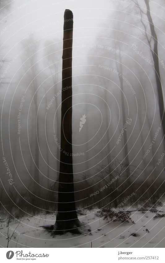 Einzelgänger Winter Landschaft Pflanze Herbst schlechtes Wetter Nebel Regen Eis Frost Schnee Baum Sträucher Wald frieren grau schwarz weiß Einsamkeit Dunst