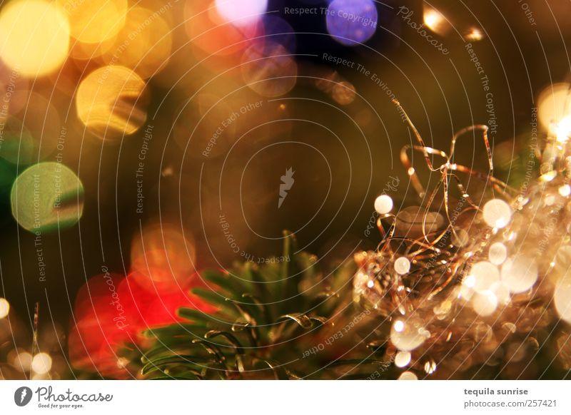 Früher war mehr Lametta Pflanze Baum Christbaumkugel Weihnachtsdekoration Weihnachtsbaum mehrfarbig gold grün silber Nordmanntanne Tanne Tannennadel
