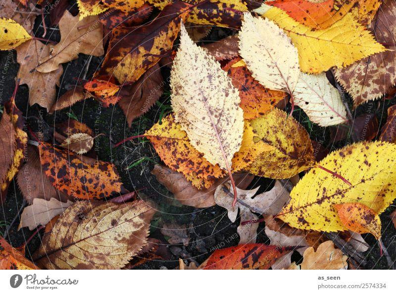 Herbstblätter Natur alt Pflanze Farbe rot Blatt gelb Umwelt Gefühle Garten orange braun Regen Park leuchten