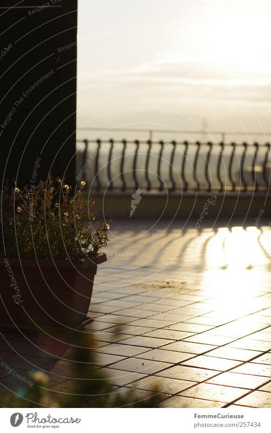 Sui tetti di Roma. Haus Einfamilienhaus Traumhaus Hochhaus Stein Rost Ornament Streifen Erholung Stadt Zufriedenheit Dach Dachterrasse Konifere Geländer