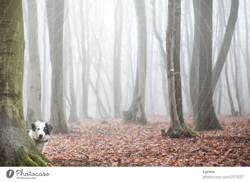 wer da? Freizeit & Hobby Natur Landschaft Winter Nebel Wald Tier Haustier Hund Tiergesicht 1 beobachten Blick stehen ästhetisch rot Stimmung Neugier Interesse
