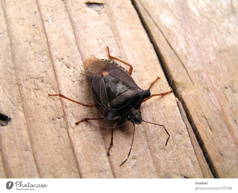 Müde Wanze Insekt Monster Tier krabbeln Makroaufnahme