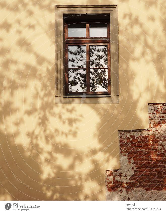 Treppenhaus Sommer Schönes Wetter Baum Blatt Kleinstadt Haus Mauer Wand Fassade Fenster Bewegung unvollendet Backstein freigelegt verputzt Putzfassade gelb