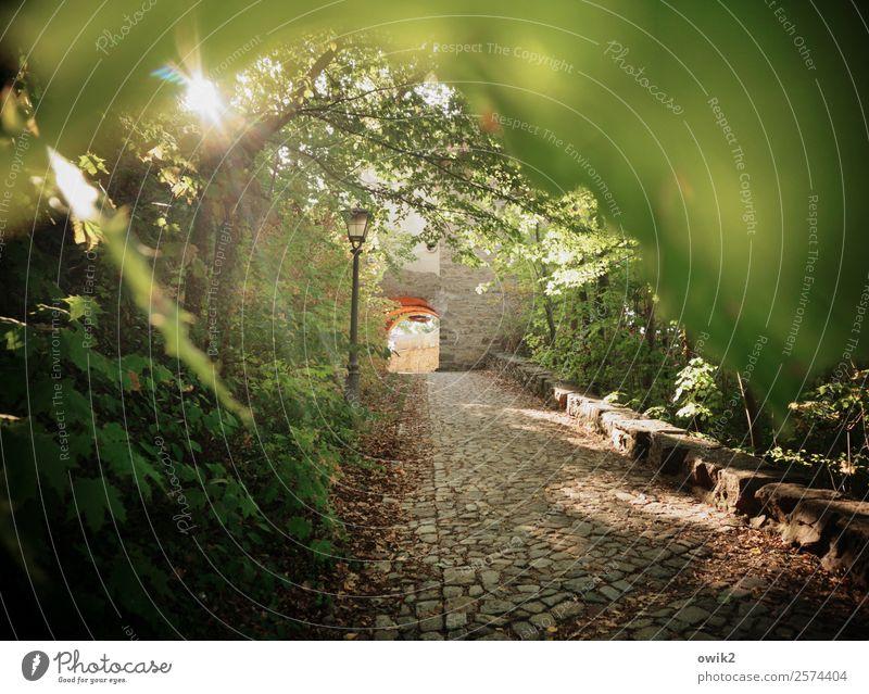 Torbogen Pflanze Baum Sträucher Blatt Bautzen Lausitz Deutschland Wege & Pfade Kopfsteinpflaster steil Straßenbeleuchtung Stein leuchten alt historisch hoch