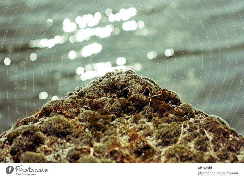 Wärme Natur Wasser Pflanze Warmherzigkeit Schönes Wetter Moos bewachsen Wildpflanze