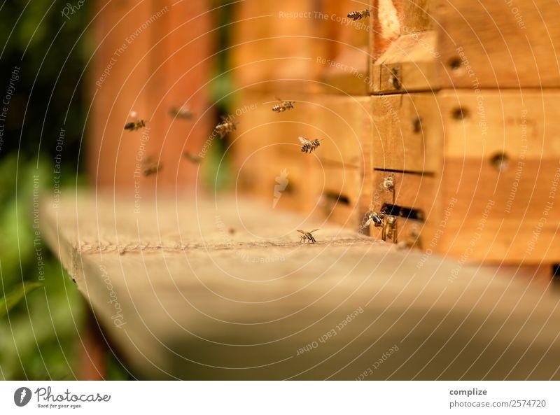 Bienenstock Nahaufnahme Lebensmittel Süßwaren Umwelt Natur Sonne Schönes Wetter Pflanze Blume Gras Zusammensein Gesellschaft (Soziologie) Gesundheit