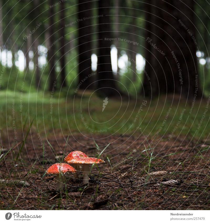 Glück auf dem Weg, den ihr geht Sinnesorgane ruhig Sommer Landwirtschaft Forstwirtschaft Pflanze Erde Wald dunkel braun grün rot trösten ästhetisch Pilz