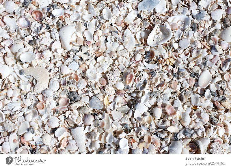 Muschelschalen auf dem Strand Design Ferien & Urlaub & Reisen Sommer Meer Tapete Natur Sand Wasser Küste grau weiß Florida Amerika usa Sanibel Island