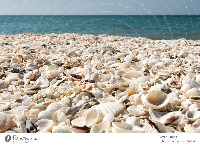 Muschelschalen auf dem Strand Ferien & Urlaub & Reisen Sommer Meer Natur Sand Wasser Küste maritim nass blau türkis weiß Gefühle Florida Amerika usa