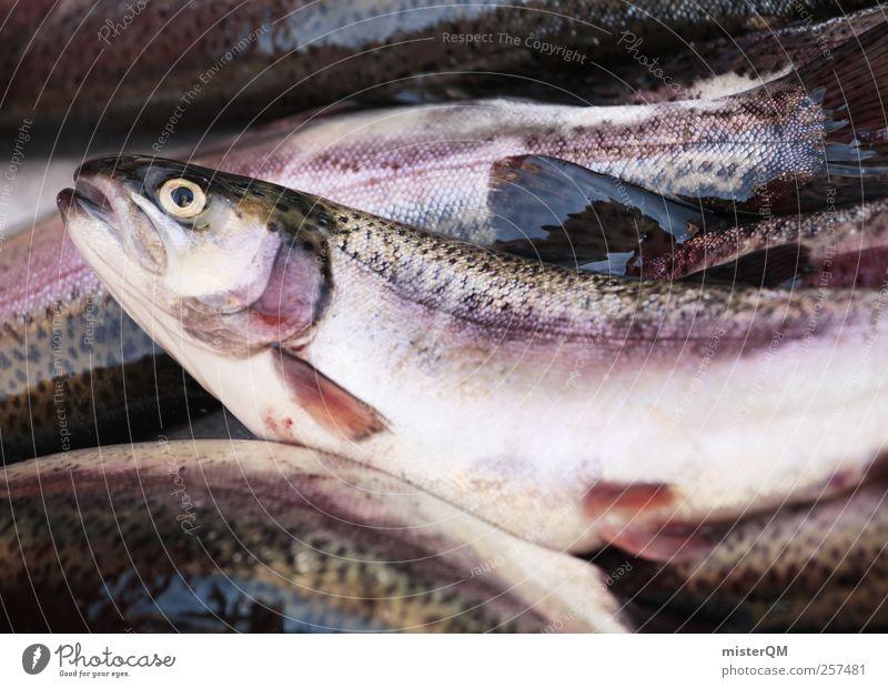 Zum Frühstück Fisch. Tier Tod Lebensmittel ästhetisch lecker Markt Ekel Fischereiwirtschaft Delikatesse Fischauge Forelle Fangquote Markttag