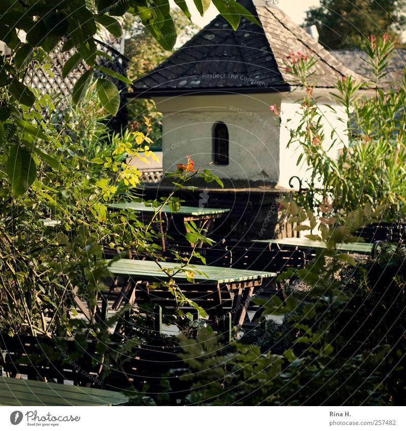 Heuriger Schönes Wetter Sträucher Garten Terrasse authentisch natürlich grün Geborgenheit Straußwirtschaft Gastronomie Gartentisch gemütlich Farbfoto