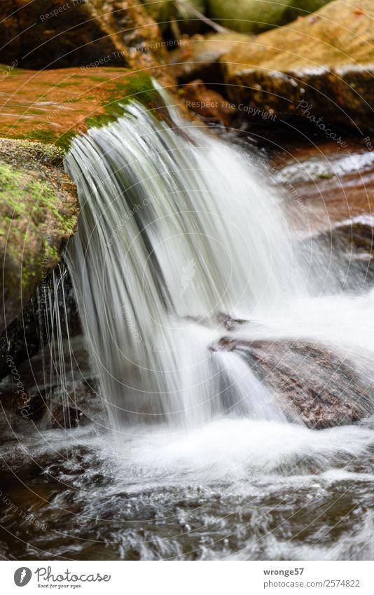 Flüsschen Ilse II Natur Wasser Herbst Wald Bach Fluss Wasserfall Harz klein nah nass natürlich braun grün weiß fließen Strömung Hochformat steinig Stein