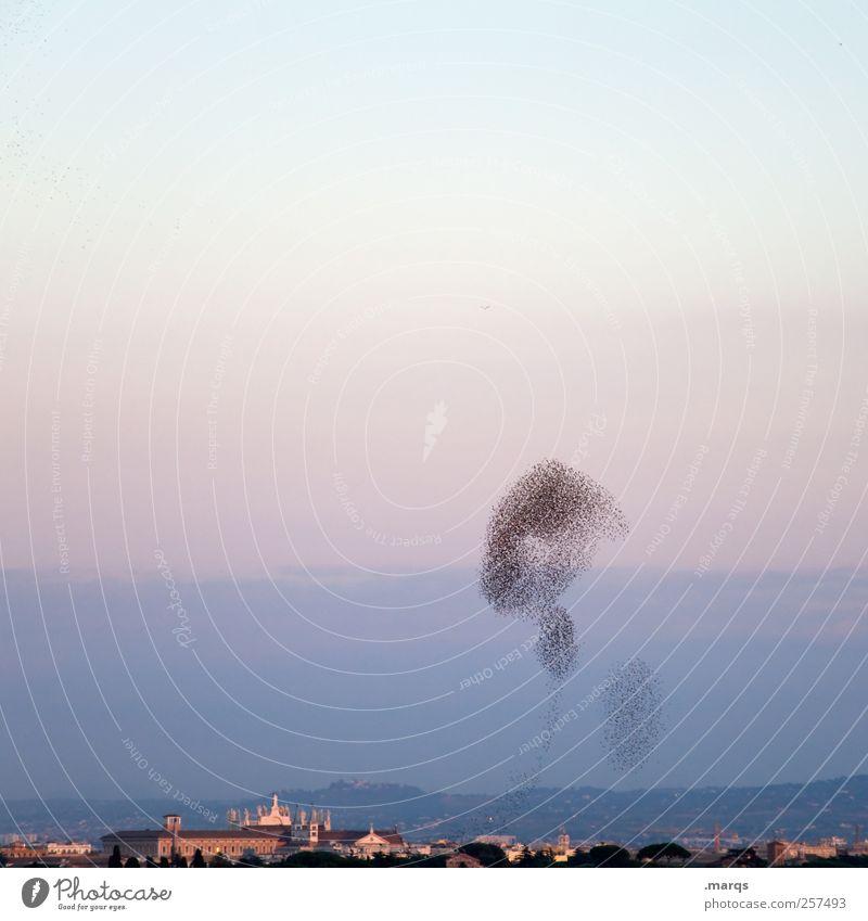 Migrationshintergrund Natur Ferien & Urlaub & Reisen Horizont Vogel fliegen Luftverkehr außergewöhnlich Team viele Italien Schönes Wetter Dynamik Teamwork