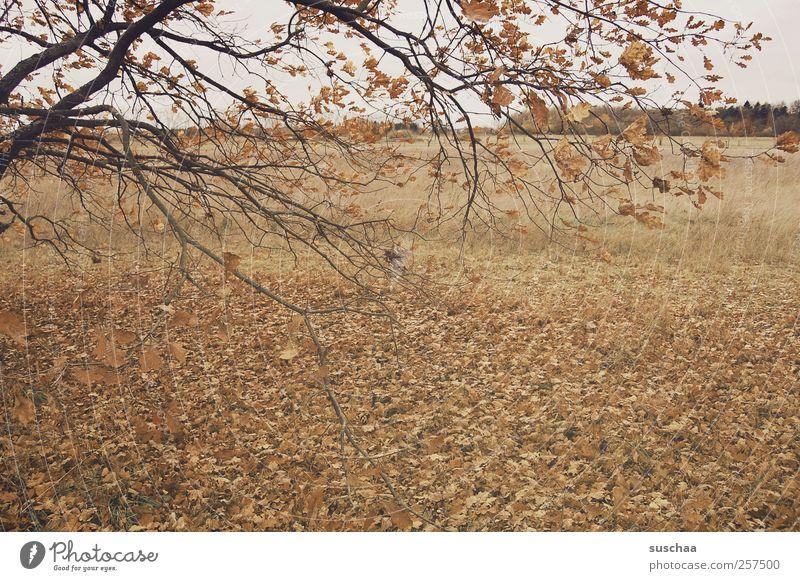 trist Umwelt Natur Herbst Klima Klimawandel Wetter Feld trocken braun Wandel & Veränderung Jahreszeit Baum Ast Blatt Laub dunkel Farbfoto Gedeckte Farben