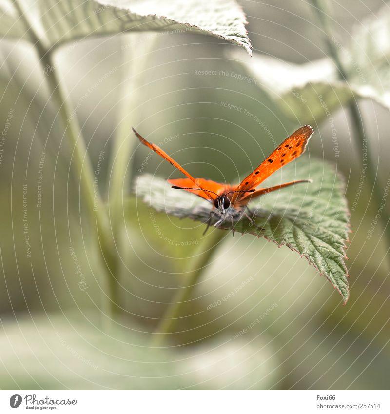 Auf ins neue Jahr.... 2012 Natur Landschaft Frühling Sommer Klimawandel Schönes Wetter Sträucher Blatt Grünpflanze Wiese Nutztier Schmetterling Tier beobachten