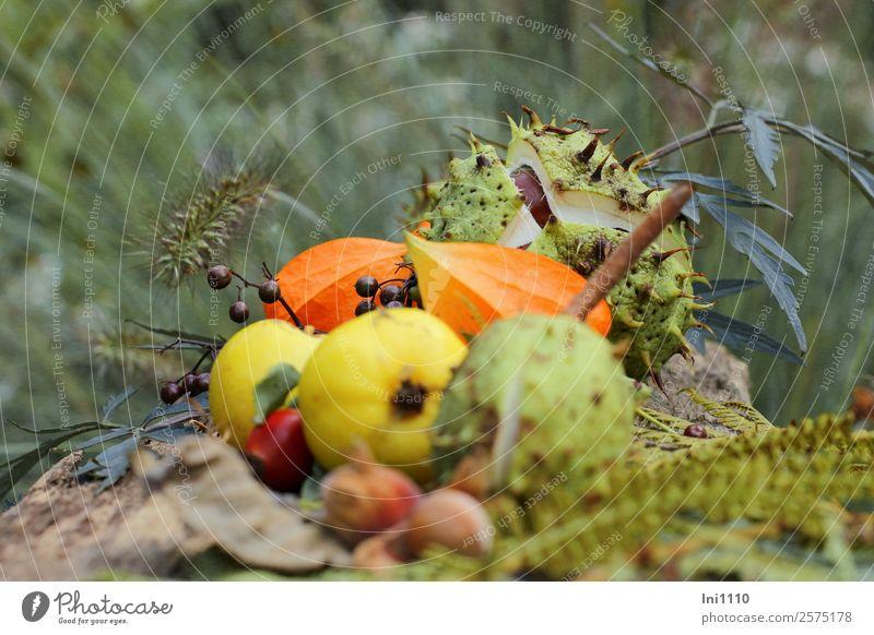 Kastanien Quitten Physalis Natur Pflanze Herbst Garten Park Wald braun mehrfarbig gelb grau grün orange schwarz weiß Nuss herbstlich Herbstfärbung Herbstwald