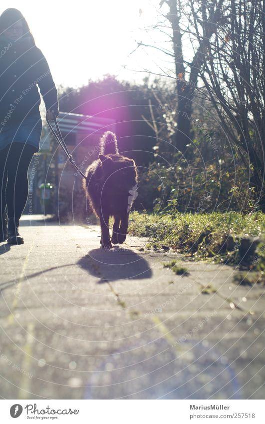 Der Mischling Mensch Hund Tier Erholung Wege & Pfade träumen Freundschaft Zusammensein laufen frei Spaziergang Vertrauen Junge Frau Bürgersteig dick genießen