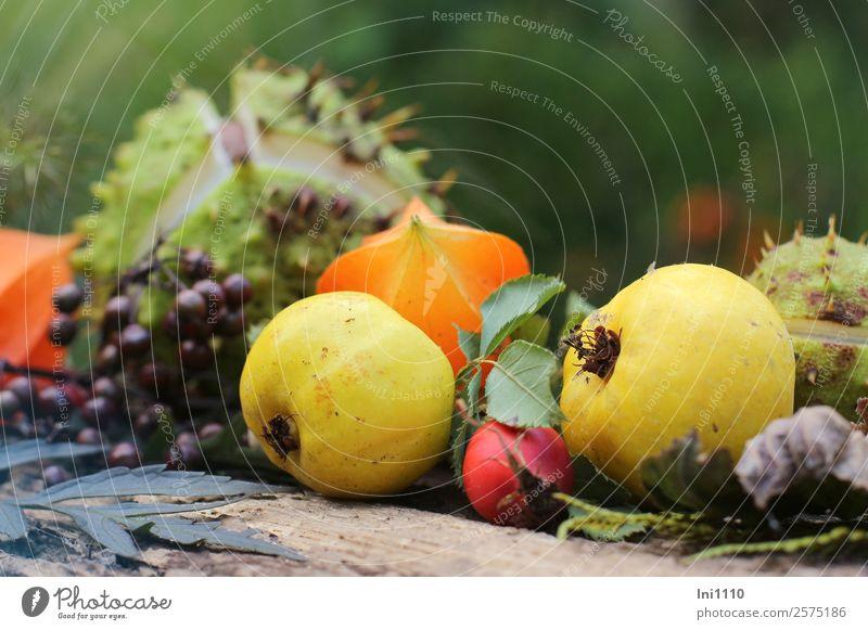 Herbst Dekoration Natur Pflanze grün rot Wald schwarz gelb Garten orange grau Frucht Wohnung Dekoration & Verzierung Park Feld