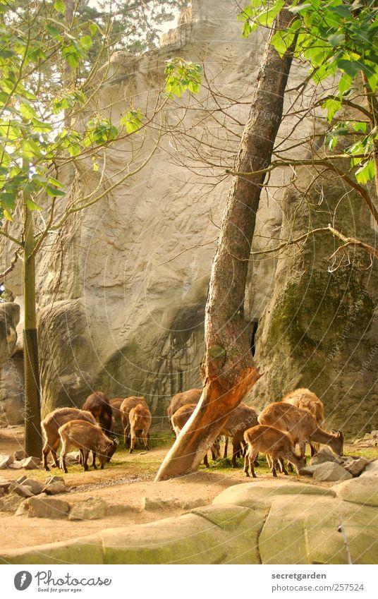 schauspiel für den jäger. Natur grün Baum Pflanze Tier Umwelt Berge u. Gebirge Holz Stein Frühling hell braun Zufriedenheit Zusammensein Tierjunges Erde