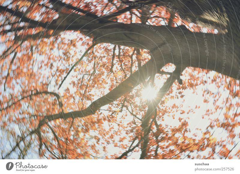 guten rutsch ... Himmel Natur Baum Sonne Klima Hoffnung Schönes Wetter Umweltschutz
