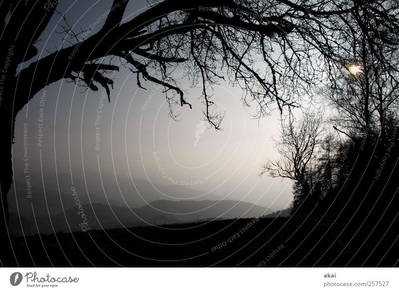 2012! Himmel Natur blau weiß Baum Ferien & Urlaub & Reisen Winter schwarz Erholung Herbst Landschaft Berge u. Gebirge Holz grau Tourismus Bundesadler