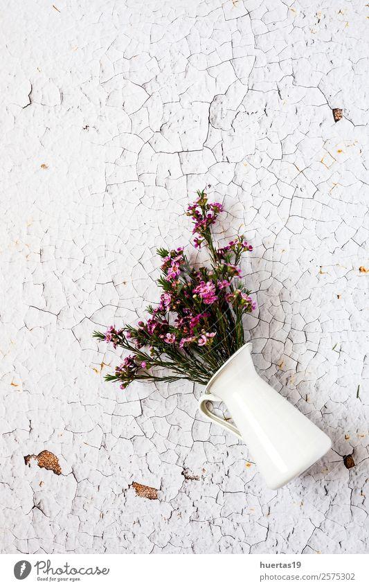 Blumen auf weißem Hintergrund. Flache Verlegung Stil Design Geburtstag Natur Blatt Blumenstrauß Liebe natürlich oben Originalität grün violett Leidenschaft
