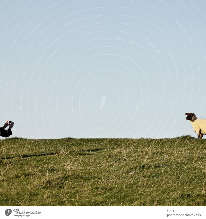Cheeeeeeeese (sheep version) Mensch Himmel Natur Hand Pflanze Tier Herbst Umwelt Wiese Landschaft Gras Küste Zufriedenheit beobachten Fell Tiergesicht