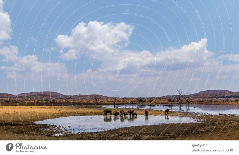 Madikwe NP Südafrika Ferien & Urlaub & Reisen Tourismus Ausflug Abenteuer Ferne Freiheit Sightseeing Safari Expedition Umwelt Natur Landschaft Erde Sand Hügel