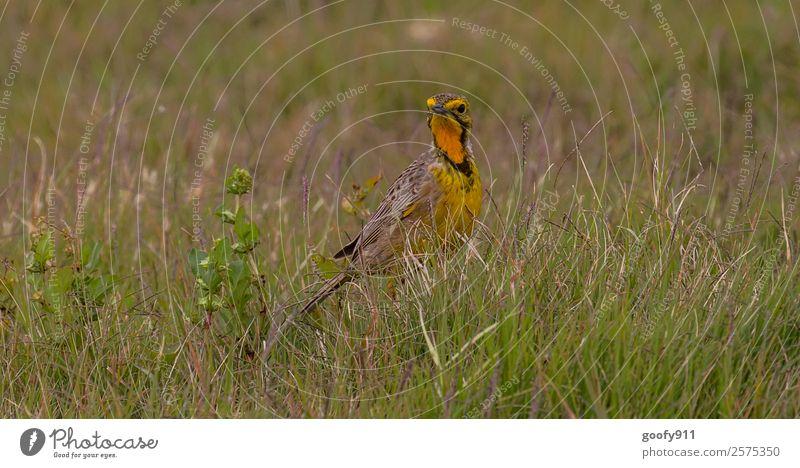 Wer stört?? elegant Ferien & Urlaub & Reisen Tourismus Ausflug Abenteuer Ferne Safari Expedition Umwelt Natur Wärme Dürre Gras Wüste Tier Wildtier Vogel