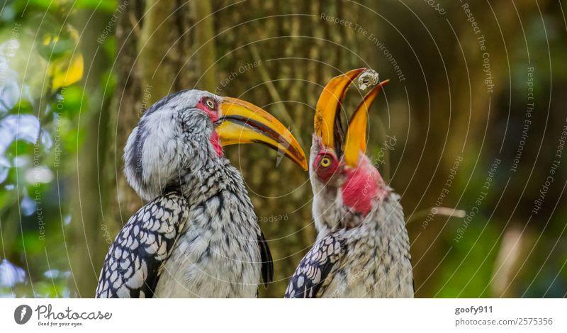 Spiel mit mir!!! Ferien & Urlaub & Reisen Ausflug Abenteuer Safari Expedition Südafrika Afrika Tier Wildtier Vogel Tiergesicht Flügel 2 Tierpaar Bewegung