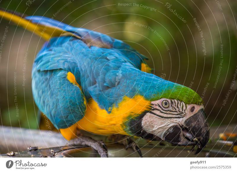 Gierig!!! Ferien & Urlaub & Reisen schön Tier Ferne Tourismus außergewöhnlich Ausflug elegant Wildtier Abenteuer Flügel beobachten festhalten exotisch Zoo