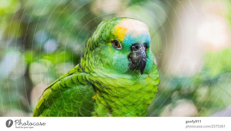 Amazonas Papagei elegant Ferien & Urlaub & Reisen Tourismus Ausflug Abenteuer Ferne Safari Expedition Tier Wildtier Vogel Tiergesicht Flügel Fell Zoo