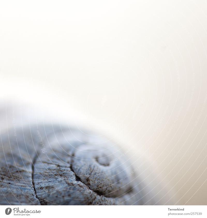 Immer.unterwegs. Schneckenhaus Haus Gehäuse Wohnung Unschärfe Schwache Tiefenschärfe Punkt Spirale drehen Kreis Kreisel gemütlich