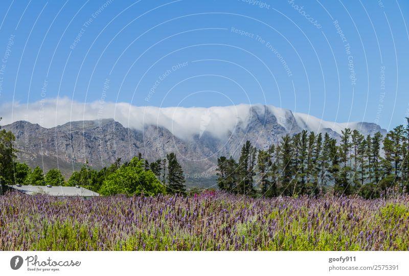 Wolkenspiel in Franschhoek Südafrika Himmel Natur Ferien & Urlaub & Reisen Sommer Pflanze schön Landschaft Einsamkeit ruhig Ferne Berge u. Gebirge Umwelt
