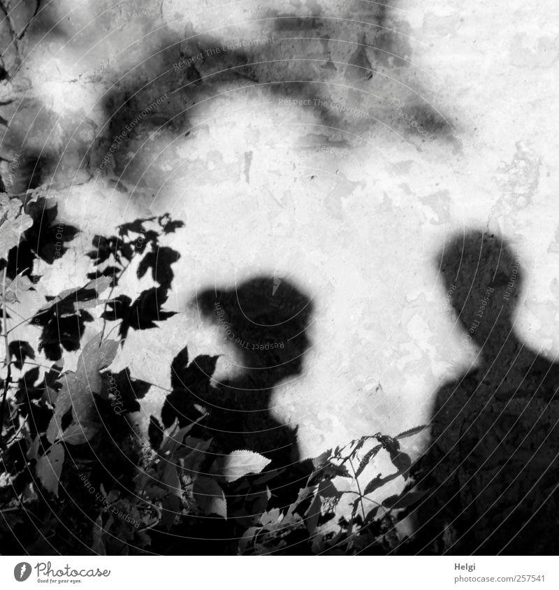 Chamansülz | Schattendasein... Mensch Frau Mann Natur weiß Pflanze Blatt schwarz Erwachsene Umwelt Herbst dunkel Wand grau Kopf Garten