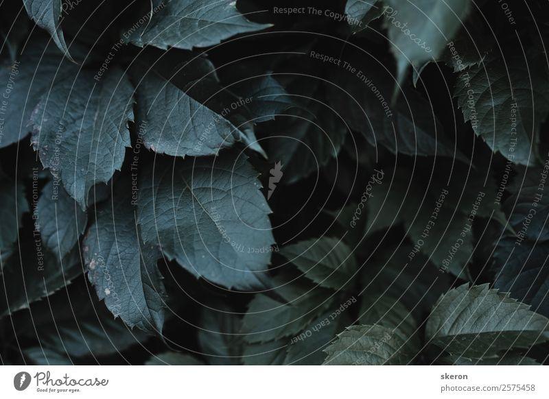 volumetrischer Busch aus grünen Blättern mit getönten Farben Kunst Umwelt Natur Landschaft Pflanze Urelemente Sommer Herbst Wetter Schönes Wetter Gras Sträucher