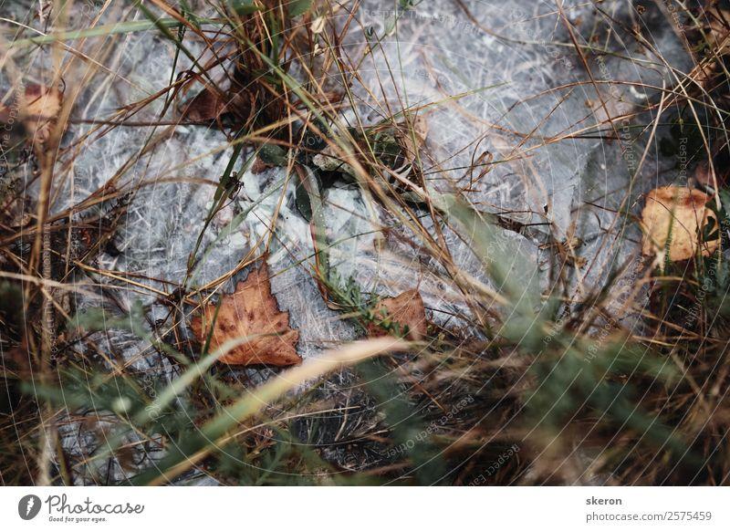Herbst Trockenblatt im Morgentau gefroren Kunst Umwelt Natur Landschaft Pflanze Sommer Klima Wetter Schönes Wetter Baum Gras Blatt Grünpflanze Garten Park Wiese
