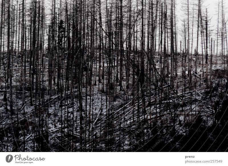 Tristesse Natur Baum Pflanze Winter schwarz Wald Umwelt Landschaft Berge u. Gebirge grau Ast Hügel Baumstamm Zerstörung Waldsterben
