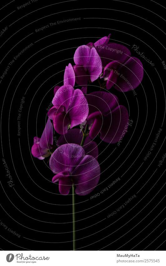 Familienorchideen Natur Pflanze Frühling Sommer Herbst Blume Gras Orchidee Blatt Blüte Garten Park Feld Wald alt authentisch elegant exotisch fantastisch