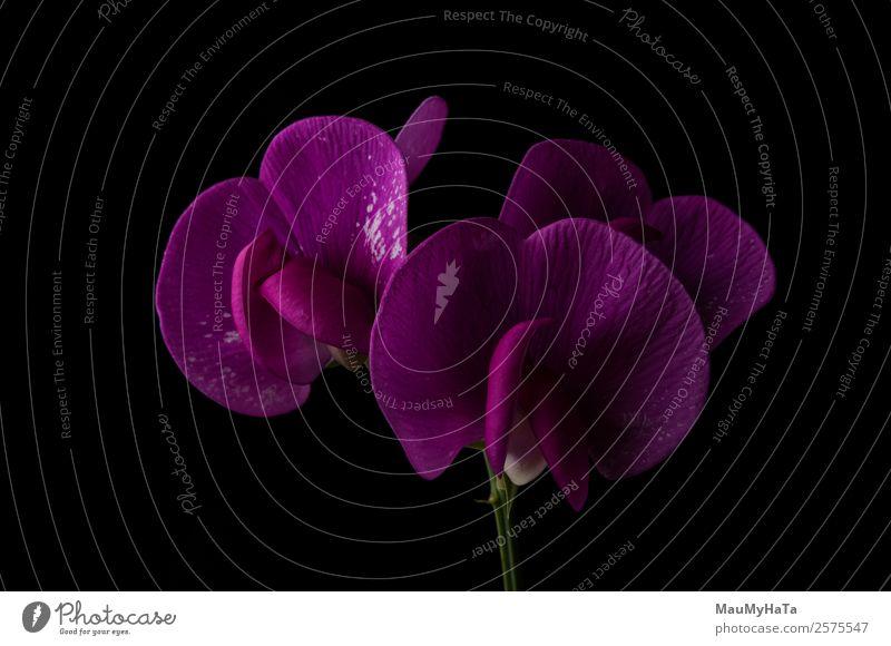 Familienorchideen Natur Pflanze Frühling Sommer Herbst Blume Gras Orchidee Blatt Blüte Garten Park Feld Wald Coolness Gefühle Euphorie Optimismus Erfolg