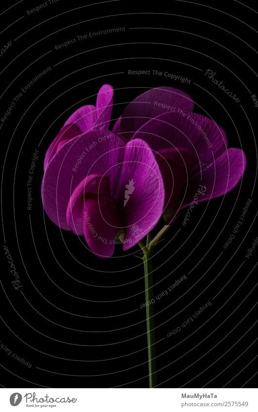 Familienorchideen Natur Pflanze Frühling Sommer Herbst Blume Gras Blatt Blüte Garten Park Feld Gefühle Glück Fröhlichkeit Frühlingsgefühle Euphorie Kontakt